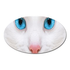 Beautiful White Face Cat Animals Blue Eye Oval Magnet by Mariart