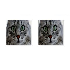 Cat Face Eyes Gray Fluffy Cute Animals Cufflinks (square) by Mariart