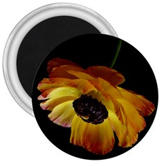 Ranunculus Yellow Orange Blossom 3  Magnets by Nexatart