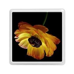Ranunculus Yellow Orange Blossom Memory Card Reader (square)  by Nexatart