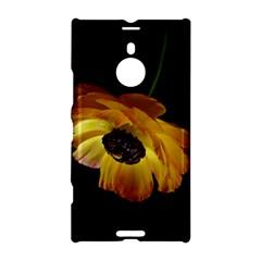 Ranunculus Yellow Orange Blossom Nokia Lumia 1520 by Nexatart