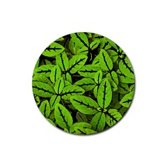 Nature Print Pattern Rubber Round Coaster (4 Pack)  by dflcprints