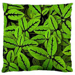 Nature Print Pattern Large Flano Cushion Case (two Sides) by dflcprints