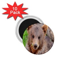 Baby Bear Animals 1 75  Magnets (10 Pack)  by Mariart