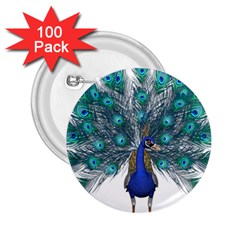 Peacock Bird Peacock Feathers 2 25  Buttons (100 Pack)  by Onesevenart