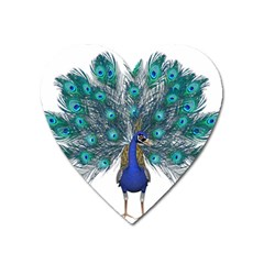 Peacock Bird Peacock Feathers Heart Magnet by Onesevenart