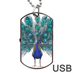 Peacock Bird Peacock Feathers Dog Tag Usb Flash (two Sides) by Onesevenart