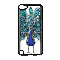Peacock Bird Peacock Feathers Apple Ipod Touch 5 Case (black) by Onesevenart