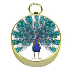 Peacock Bird Peacock Feathers Gold Compasses by Onesevenart