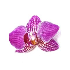 Lilac Phalaenopsis Aquarel  Watercolor Art Painting Shower Curtain 60  X 72  (medium)  by picsaspassion