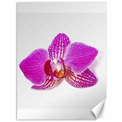 Lilac Phalaenopsis Flower, Floral Oil Painting Art Canvas 36  X 48   by picsaspassion