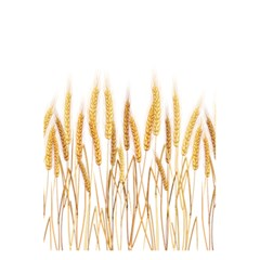 Wheat Plants 5 5  X 8 5  Notebooks by Mariart