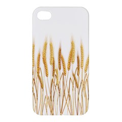 Wheat Plants Apple Iphone 4/4s Hardshell Case by Mariart