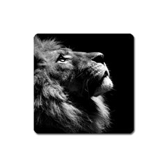 Male Lion Face Square Magnet by Celenk