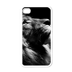 Male Lion Face Apple Iphone 4 Case (white) by Celenk