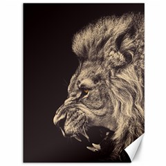 Angry Male Lion Canvas 36  X 48   by Celenk