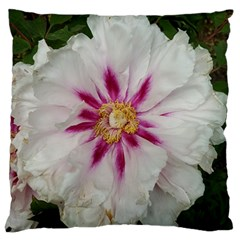 Floral Soft Pink Flower Photography Peony Rose Large Flano Cushion Case (two Sides) by yoursparklingshop