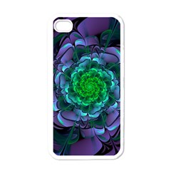 Beautiful Purple & Green Aeonium Arboreum Zwartkop Apple Iphone 4 Case (white) by jayaprime
