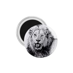 Lion Wildlife Art And Illustration Pencil 1 75  Magnets
