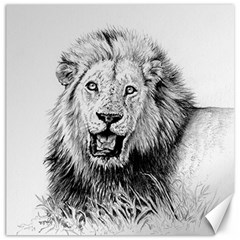 Lion Wildlife Art And Illustration Pencil Canvas 16  X 16   by Celenk