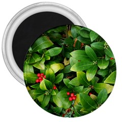 Christmas Season Floral Green Red Skimmia Flower 3  Magnets by yoursparklingshop