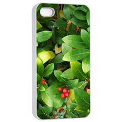 Christmas Season Floral Green Red Skimmia Flower Apple Iphone 4/4s Seamless Case (white) by yoursparklingshop