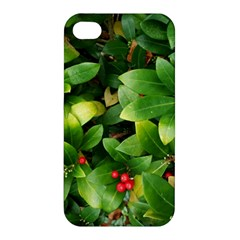 Christmas Season Floral Green Red Skimmia Flower Apple Iphone 4/4s Premium Hardshell Case by yoursparklingshop