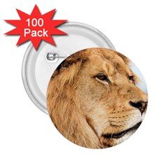 Big Male Lion Looking Right 2 25  Buttons (100 Pack)  by Ucco