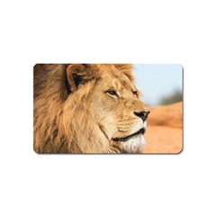 Big Male Lion Looking Right Magnet (name Card) by Ucco