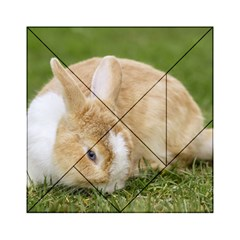 Beautiful Blue Eyed Bunny On Green Grass Acrylic Tangram Puzzle (6  X 6 ) by Ucco