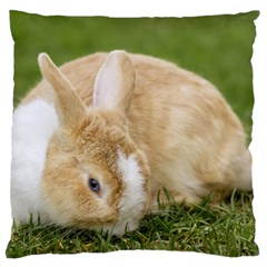 Beautiful Blue Eyed Bunny On Green Grass Standard Flano Cushion Case (one Side) by Ucco