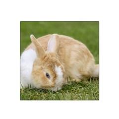 Beautiful Blue Eyed Bunny On Green Grass Satin Bandana Scarf by Ucco
