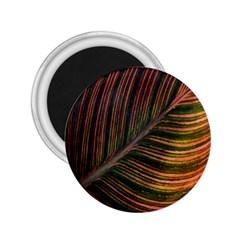 Leaf Colorful Nature Orange Season 2 25  Magnets by Celenk