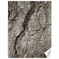 Tree Bark A Canvas 36  X 48   by MoreColorsinLife