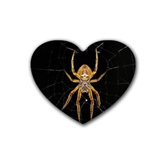 Insect Macro Spider Colombia Heart Coaster (4 Pack)  by BangZart