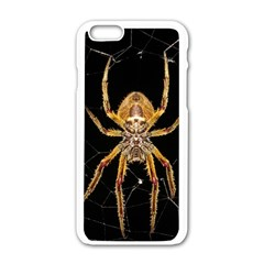 Insect Macro Spider Colombia Apple Iphone 6/6s White Enamel Case by BangZart