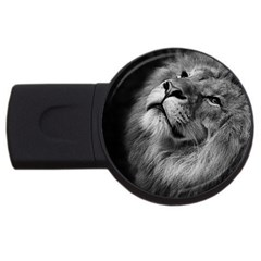Feline Lion Tawny African Zoo Usb Flash Drive Round (2 Gb) by BangZart