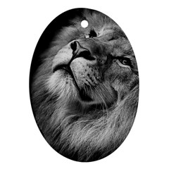 Feline Lion Tawny African Zoo Oval Ornament (two Sides) by BangZart
