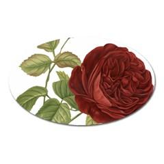 Rose 1077964 1280 Oval Magnet by vintage2030