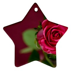 Rose 693152 1920 Ornament (star) by vintage2030