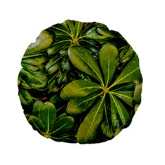 Top View Leaves Standard 15  Premium Flano Round Cushions by dflcprints