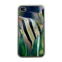 Angelfish 1 Apple Iphone 4 Case (clear) by trendistuff