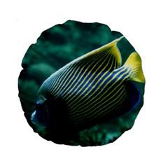 Angelfish 4 Standard 15  Premium Round Cushions