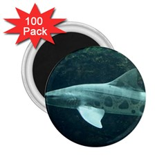 Leopard Shark 2 25  Magnets (100 Pack)  by trendistuff