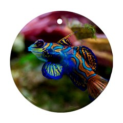 Mandarinfish 1 Ornament (round)