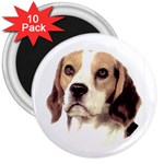 Beagle ^ 3  Magnet (10 pack)