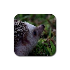 Standard Hedgehog Rubber Square Coaster (4 pack) from ArtsNow.com Front