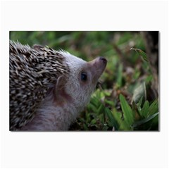 Standard Hedgehog Postcard 4  x 6  from ArtsNow.com Front