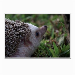 Standard Hedgehog Postcard 5  x 7  from ArtsNow.com Front
