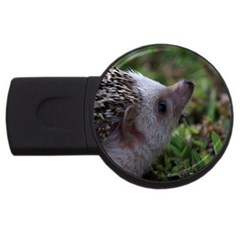 Standard Hedgehog USB Flash Drive Round (2 GB) from ArtsNow.com Front